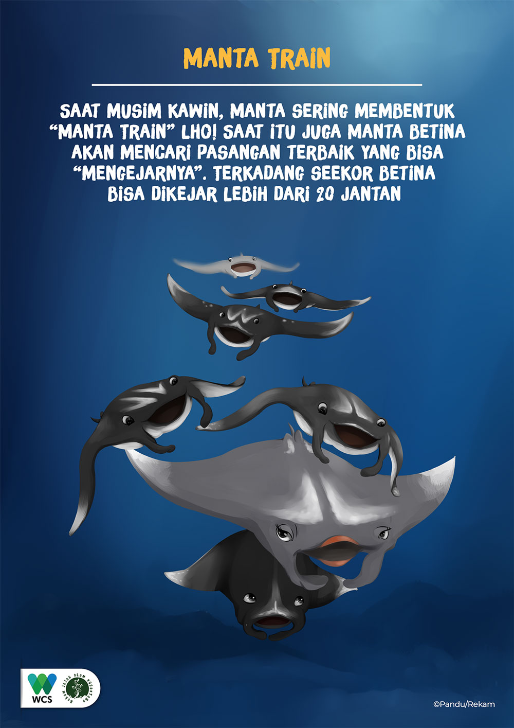 Manta fun fact
